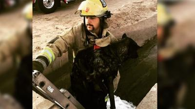 Phoenix firefighter rescues dog from canal