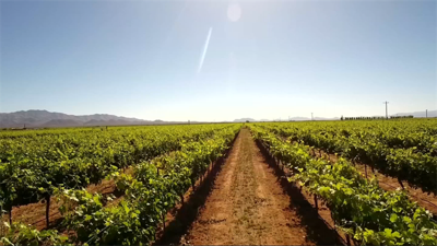 Field Trip Friday: Wine production in Willcox