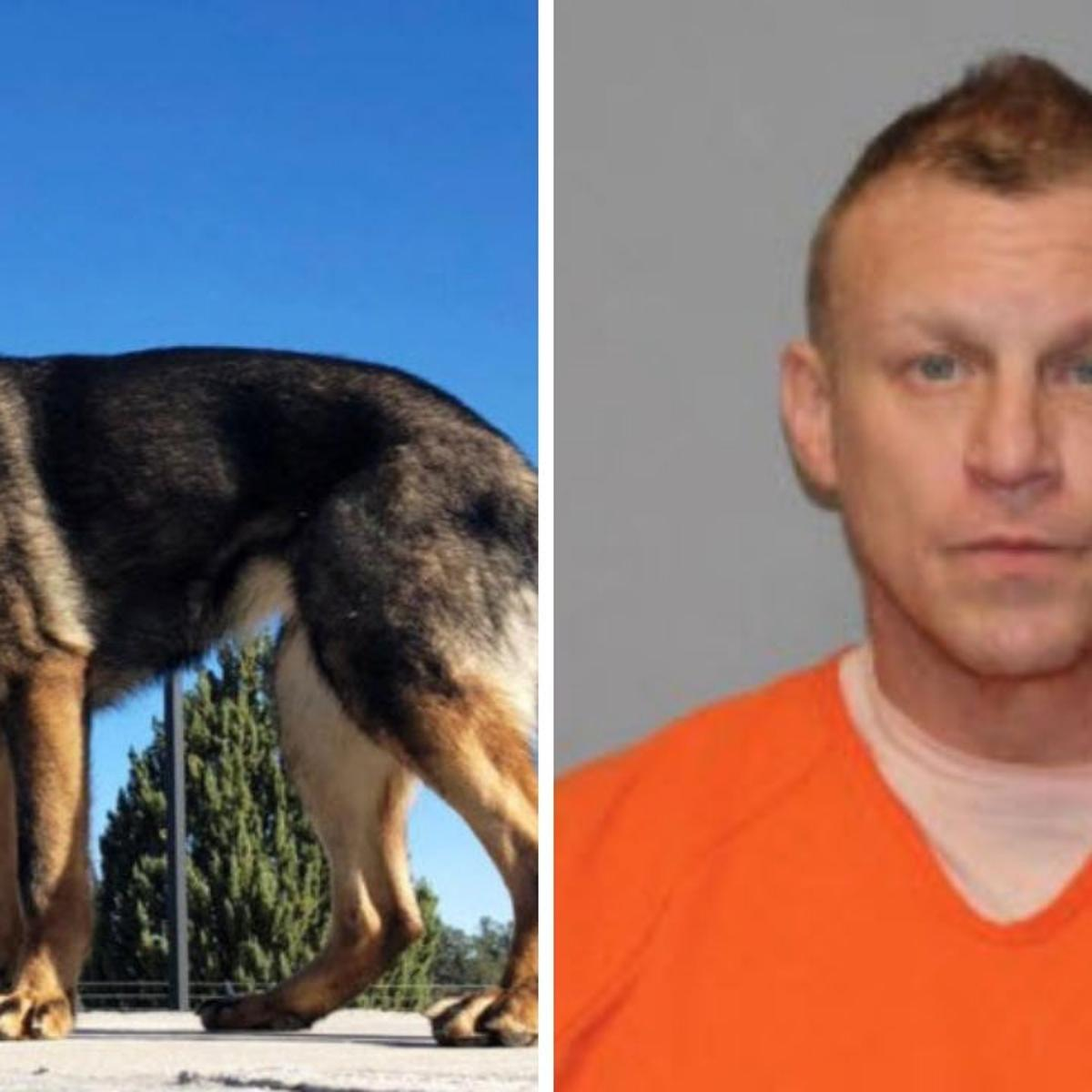 New Yavapai County Sheriff's Office K9 makes major meth bust