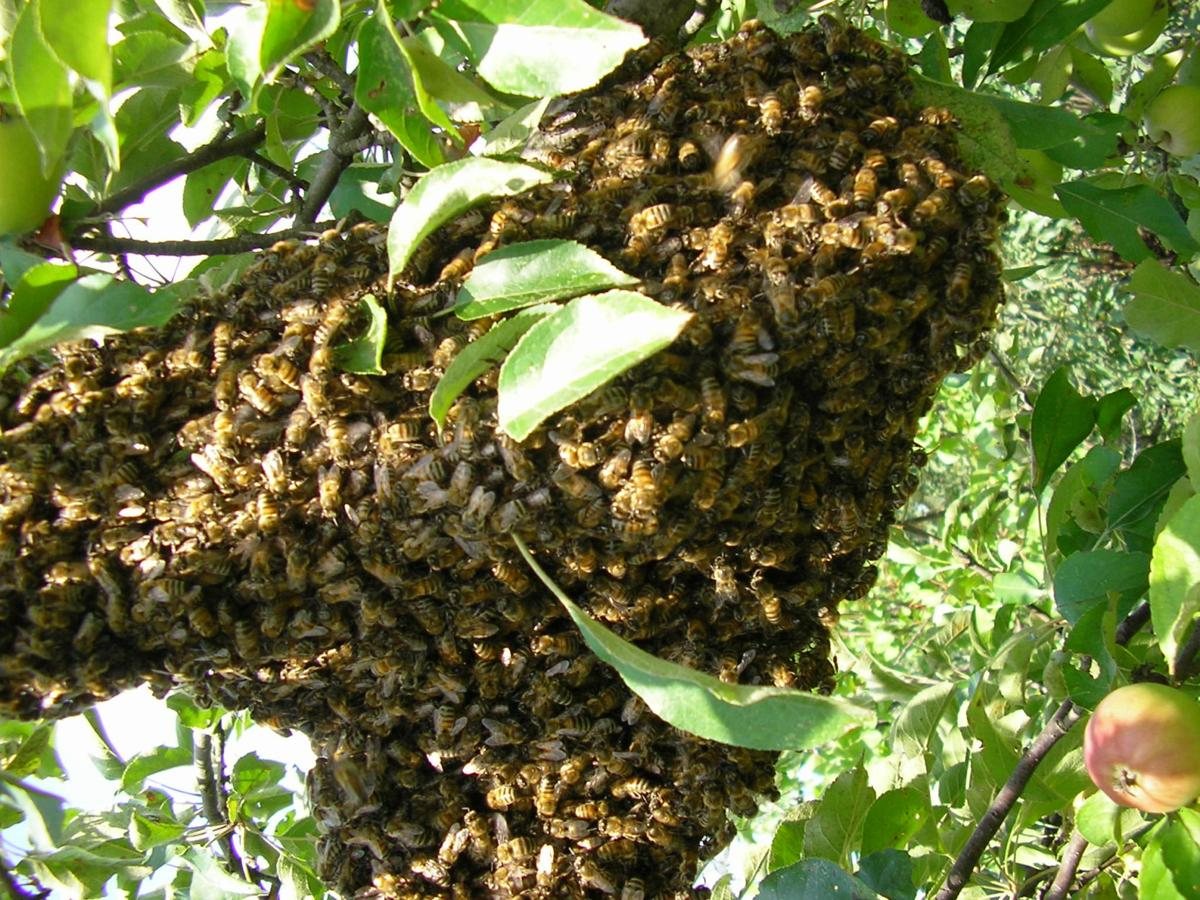 Family of bees