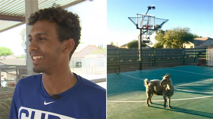 Cubs draft player with pet goat
