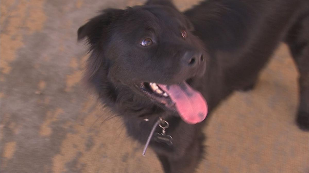 Caught on camera: Dog rescues his friend from drowning in pool in Mesa