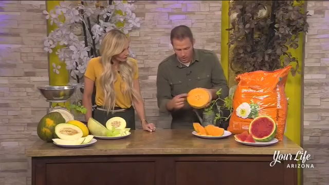 How To Grow Summer Melons Your Life Arizona Azfamily Com Cantaloupe hotels sri lanka an epitome of luxury, comfort and style, constantly inspires you through its design ethos, and creative execution. how to grow summer melons your life