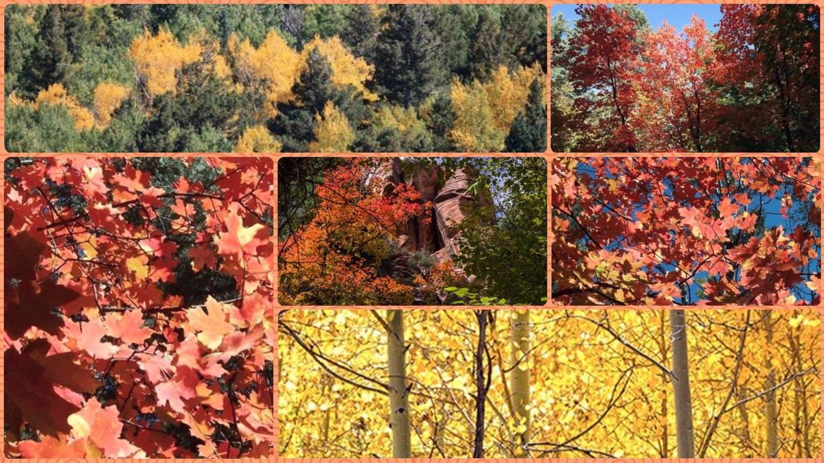 Fall colors about to arrive in Arizona