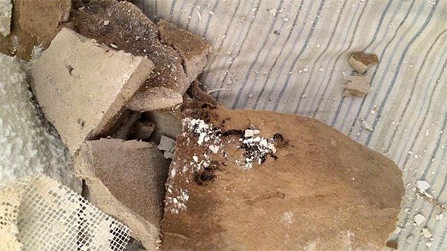 Woman finds mold in Chandler apartment, alleges cover-up