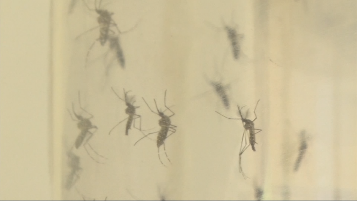 Are mosquitoes bugging you? Some parts of Phoenix area have more problem pests than others