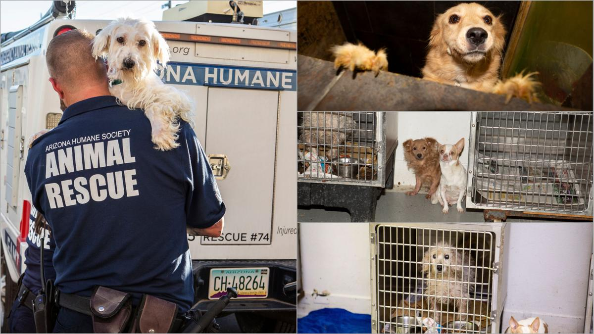 45 dogs and cats seized from Phoenix dog shelter and rescue