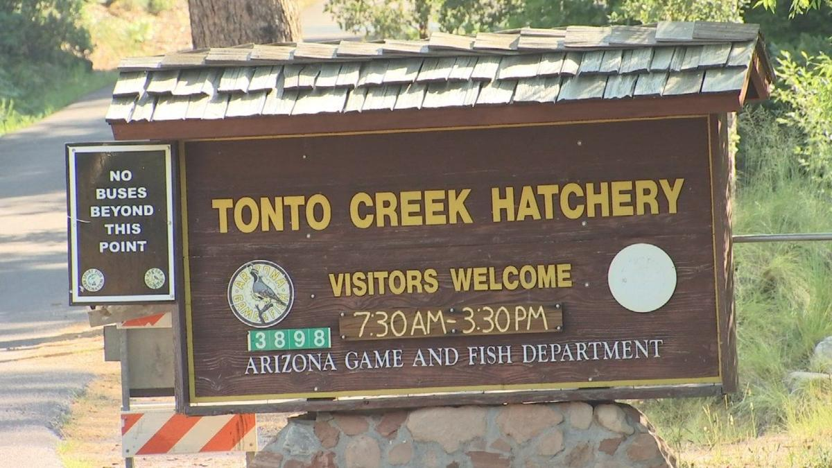 Nothing fishy about cool summer escape to Tonto Creek Hatchery, Catch-a-Trout