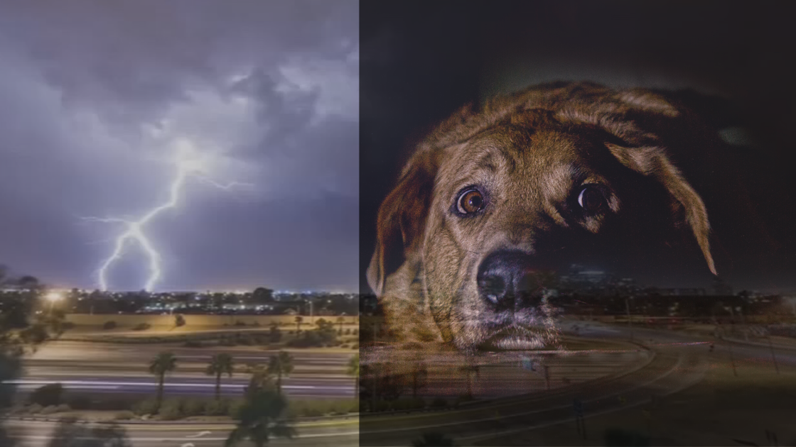 Help your pets weather the storm during the Arizona monsoon