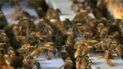 Bees attack 2 in south Scottsdale