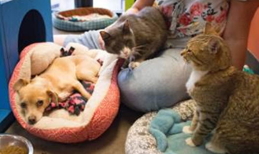 The Arizona Animal Welfare League is trying to find a home for this trio of pals rescued from a homeless encampment in California.