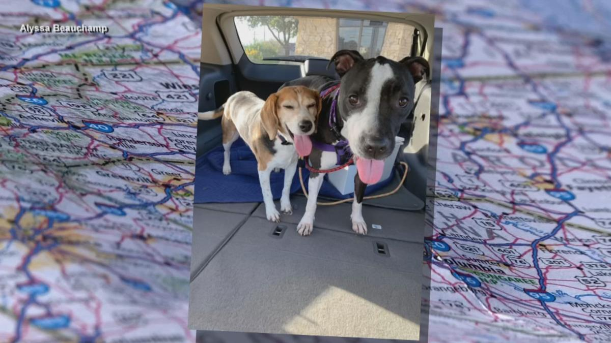 Pair of dogs makes road trip across crountry