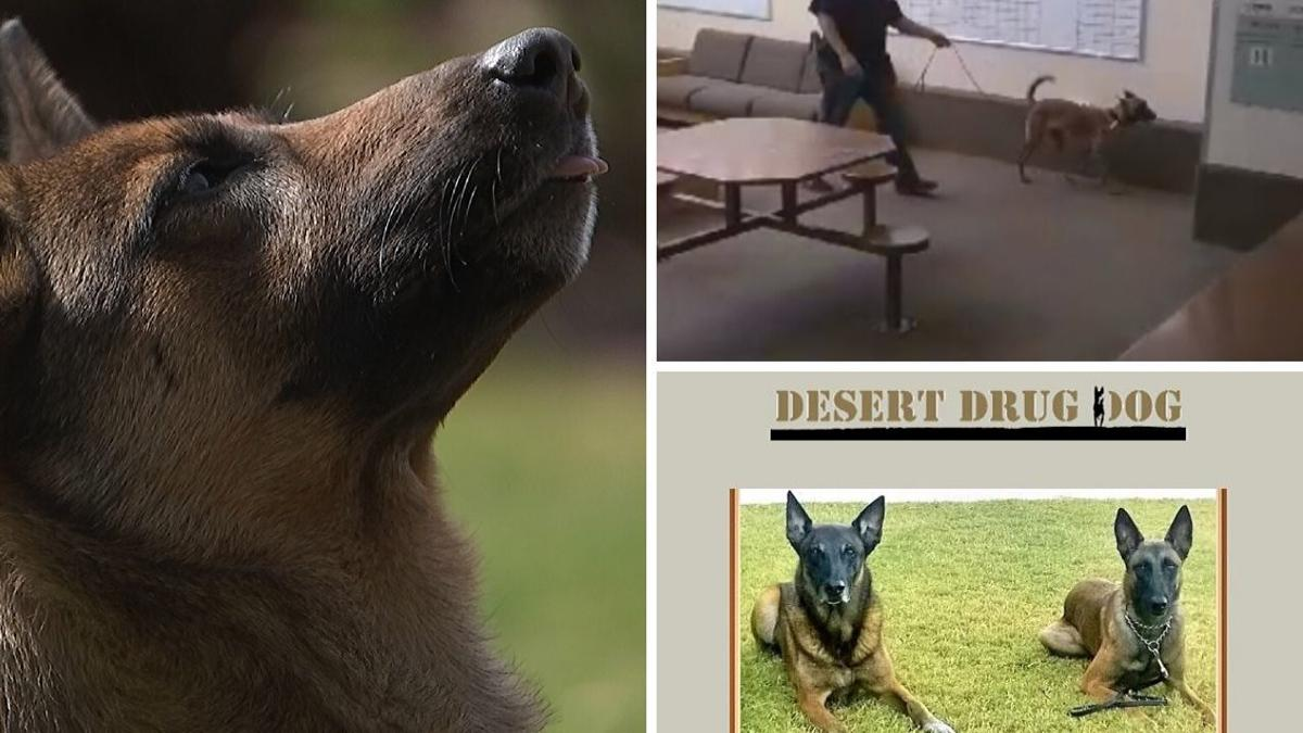 Phoenix business provides drug dog detection