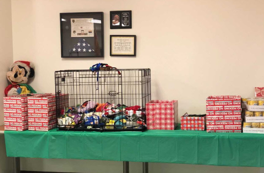 An early Christmas treat for hundreds of homeless animals in county shelters