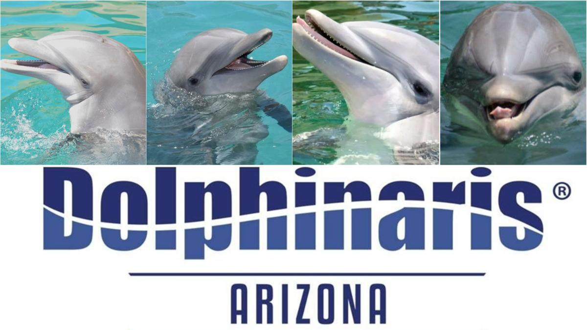 4 dolphins at Dolphinaris Arizona dead in 18 months