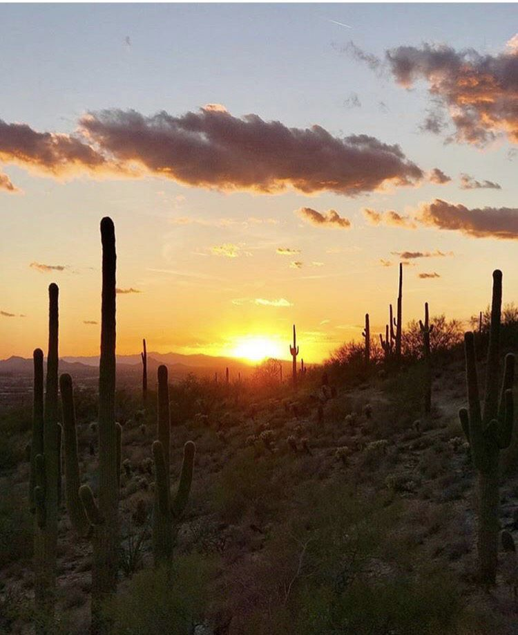 Sunset at McDowell Mountains