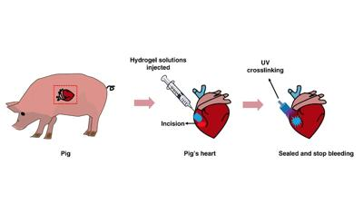 Light-activated bio-glue that moves with beating heart has potential for human use