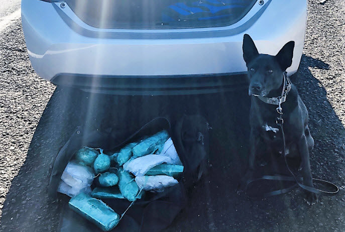 The K9 alerted deputies that there could be drugs in the car.