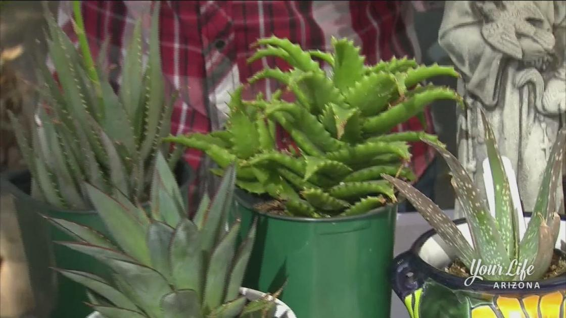 Simple Tips For Growing Aloe Vera In Your Yard Your Life Arizona Azfamily Com