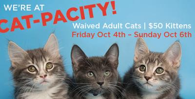 Adult cat fees waived during weekend adoption special at AZ Humane Society