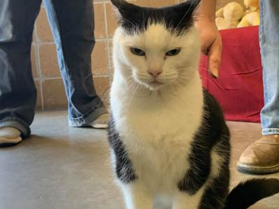An animal shelter's adoption ad for a sassy cat: 'She's just a jerk'