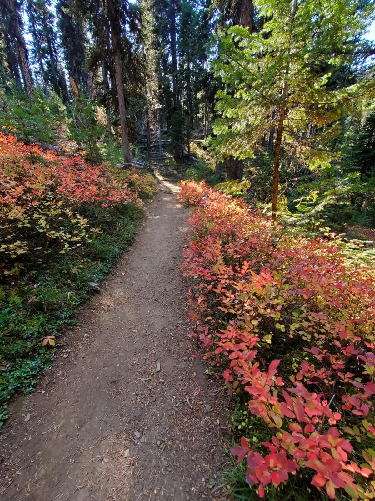 Strawberry trail