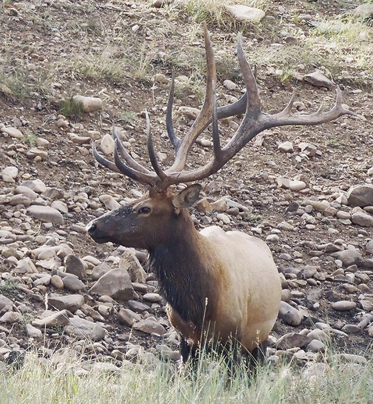 102017 REC_Elk LoneBull 16_Lewis Color.jpg