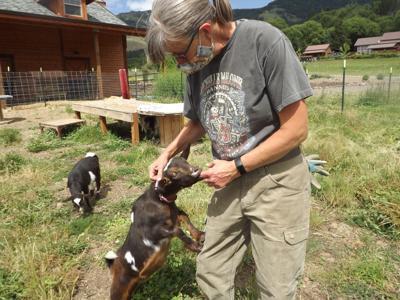 Farm Loop goats 2.JPG