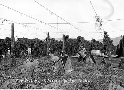 Hop Picking at North Yakima Washington ca. 1910