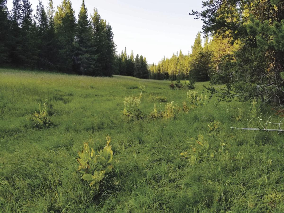 Beatty Creek Meadow