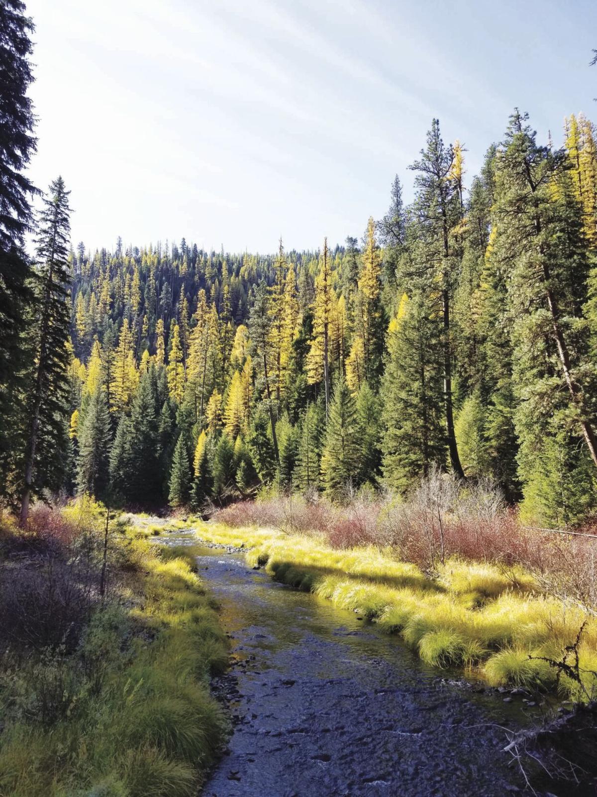 Granite Creek.jpg