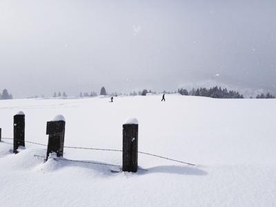 Snowshoe 3.jpg