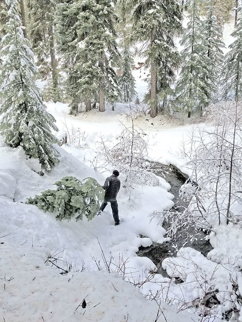 121319-REC_Christmas-Tree-Hunt-1_lb.jpg