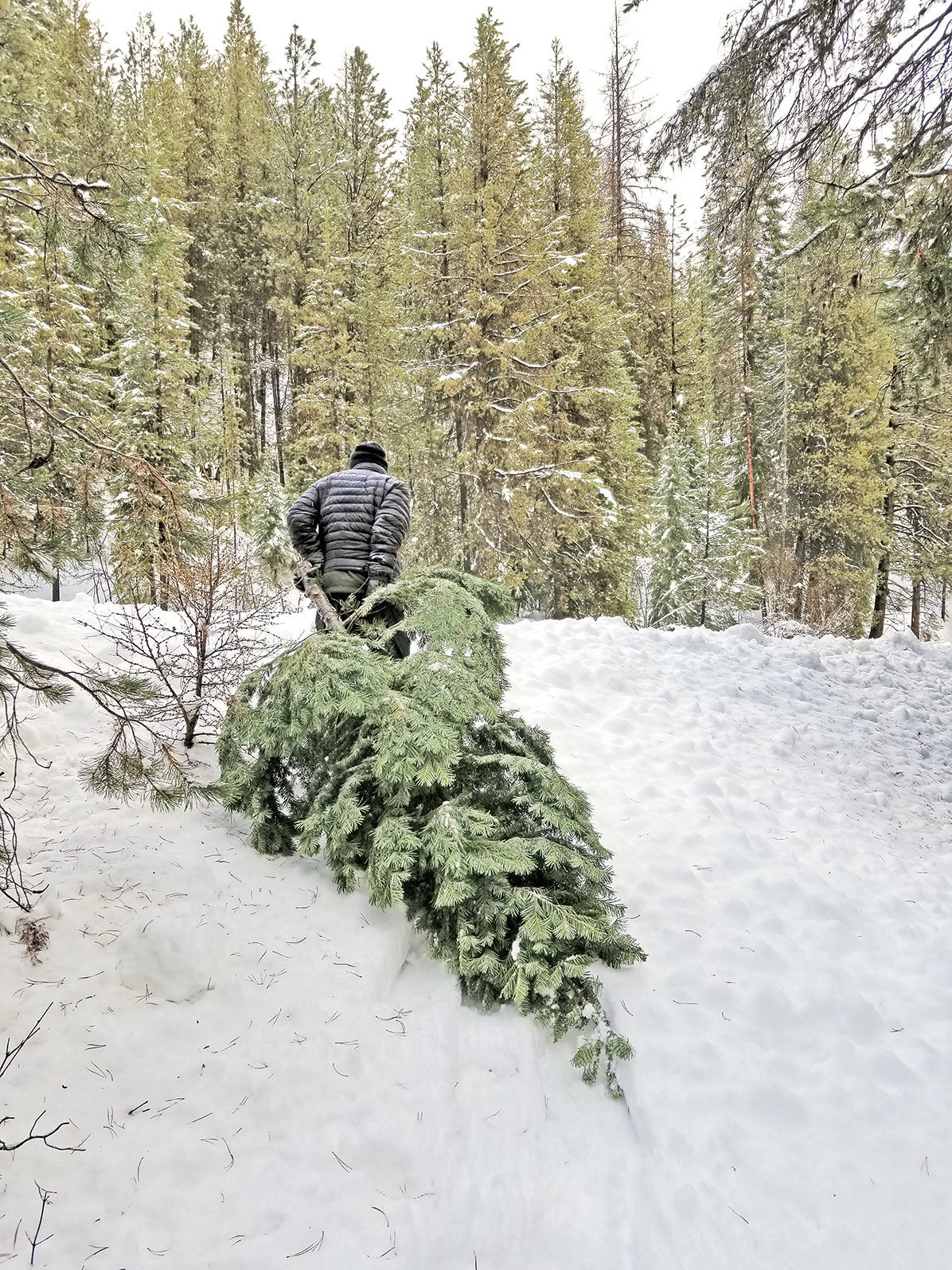 121319-REC_Christmas-Tree-Hunt-2_lb.jpg