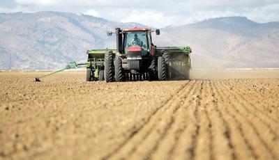 Oregon wheat harvest