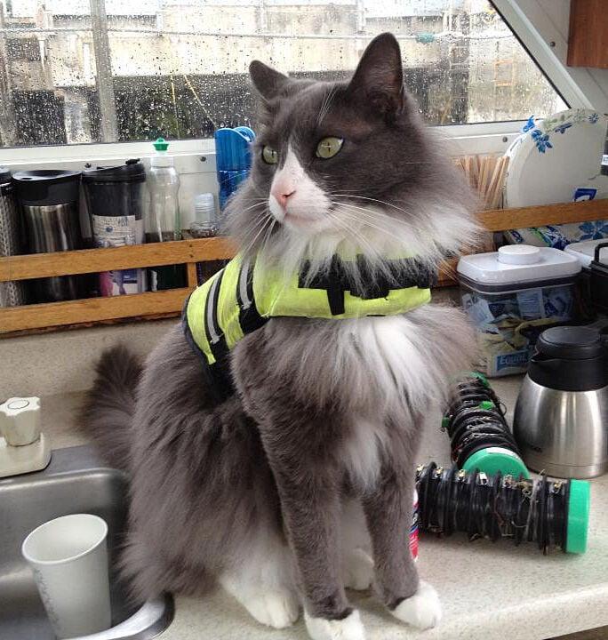 Cat with Lifejacket