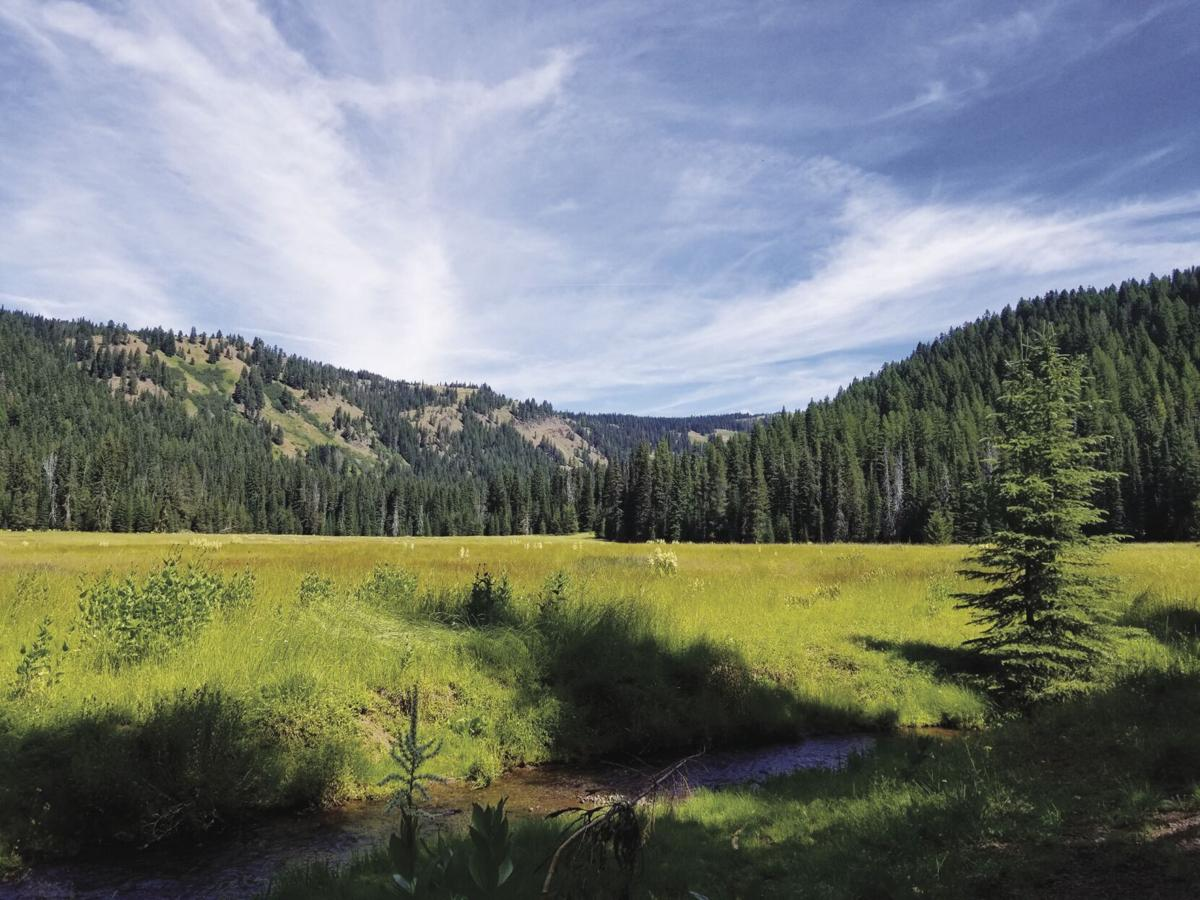 Catherine Creek Meadow.jpg