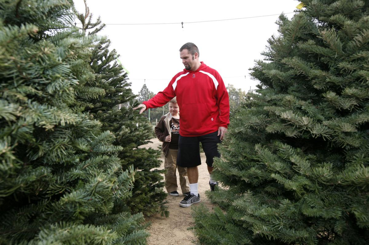Christmas Tree Lots.Bakersfield Has More Christmas Tree Lots Fewer Trees This