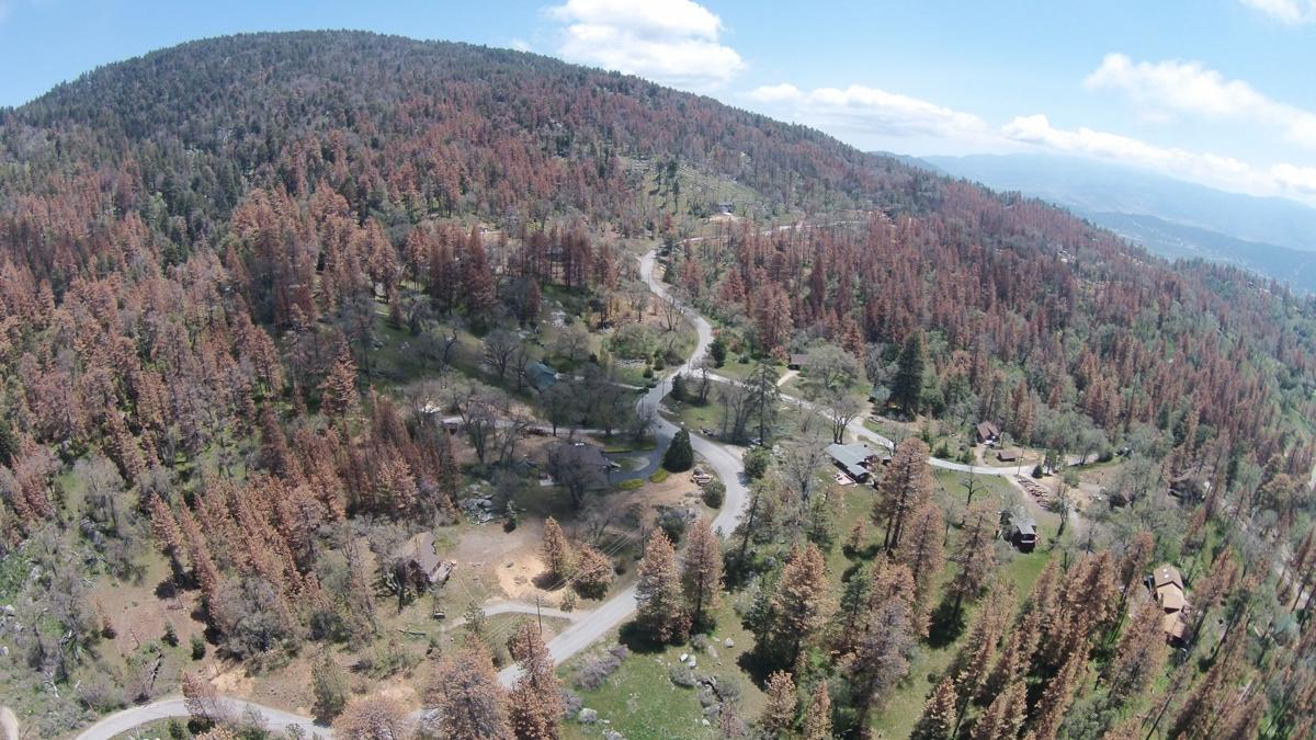 BVS dead trees