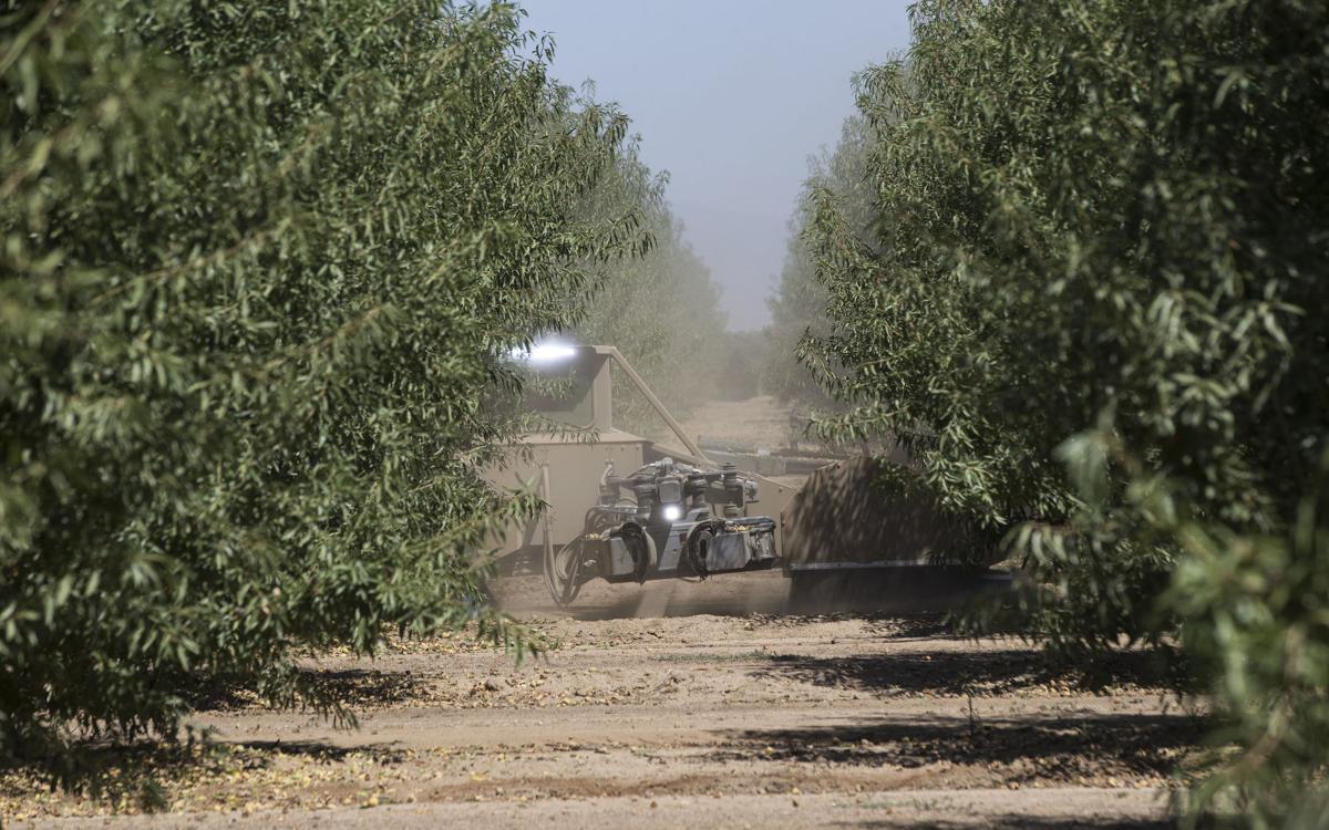 20190814-bc-almondharvest