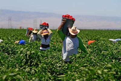farmworkers.04.RRD-15