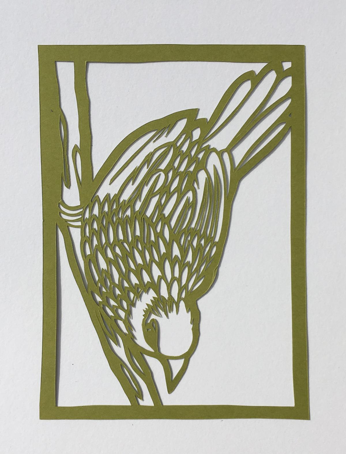 Bird Sherwyn
