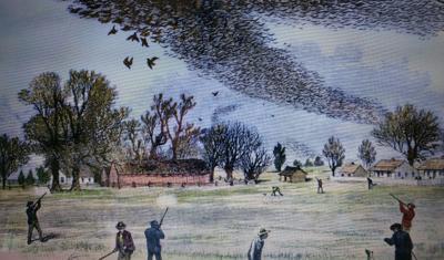 Ken photo of pigeons