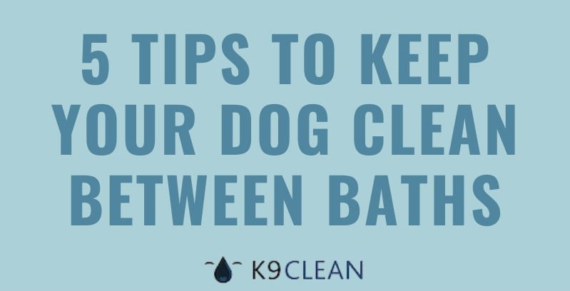 K9 Clean - 5 tips to keep your dog clean