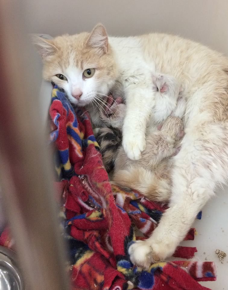 feral cats mama and kittens