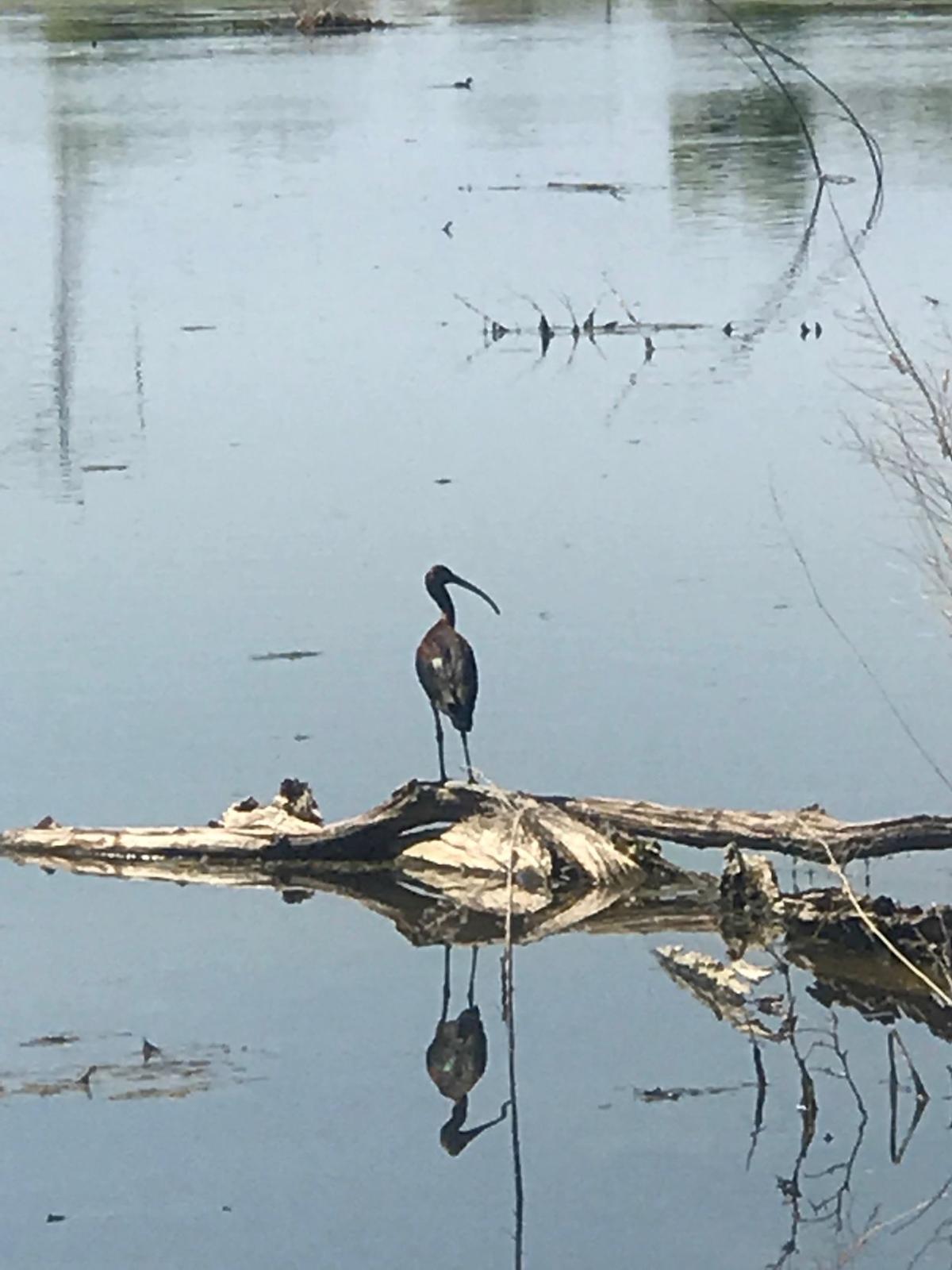 Kern River Bike Trail wildlife