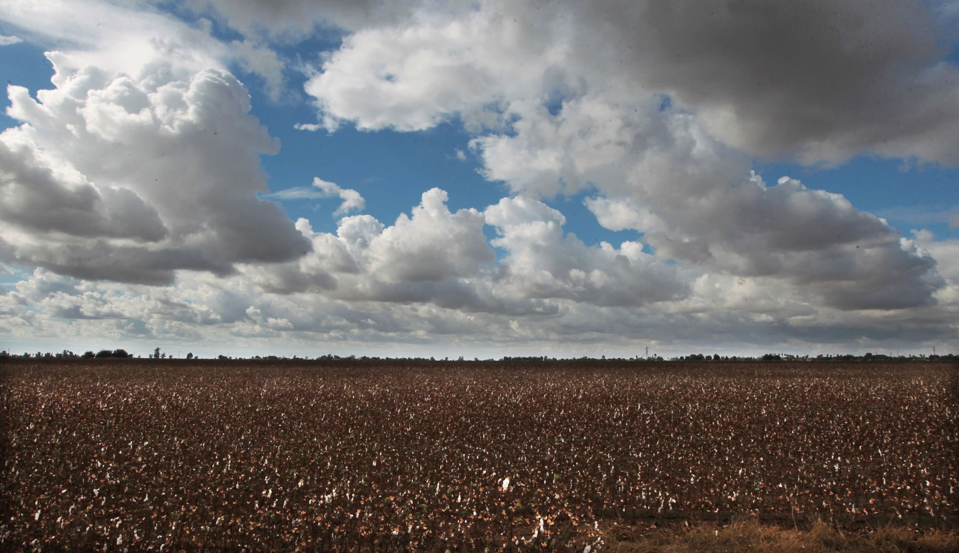 Bakersfield's Jess Smith & Sons Cotton cuts deal with Singapore conglomerate