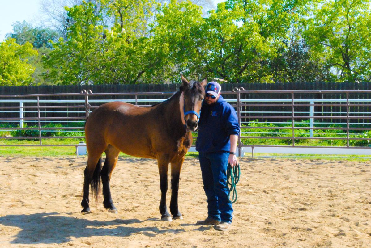M.A.R.E Therapeutic Riding Center