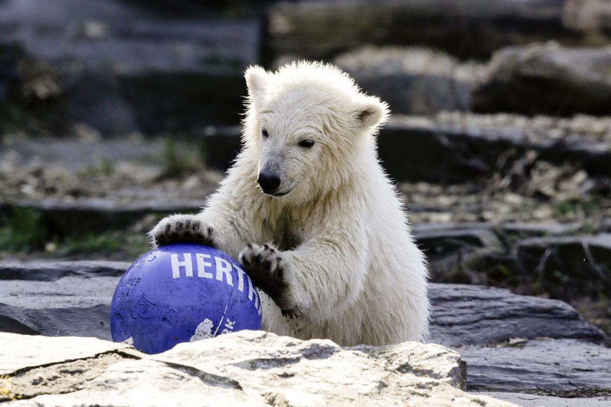 APTOPIX Germany Polar Bear