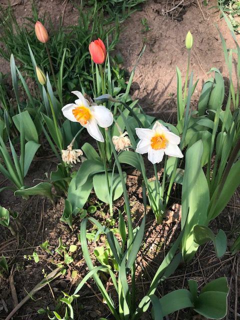 flowers tyl